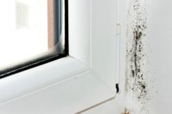 Schimmelbefall ums Fenster